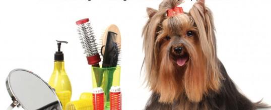 WELCOME TO<br /> <b>LUCKY DOG U-BATH AND URBAN DAYCARE</b>